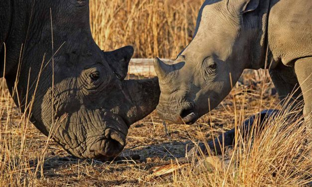 What you need to know when visiting Mkuze Game Reserve