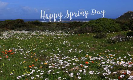 Bucket List Friday – Visit the West Coast during the Flower Season