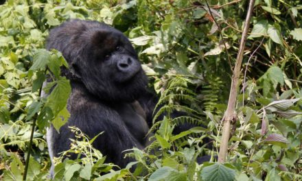 Bucket List Friday – From losing weight to Gorilla Trekking