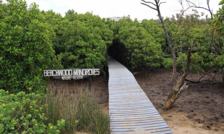 Beachwood Mangroves Nature Reserve – Unlocking it's Secrets