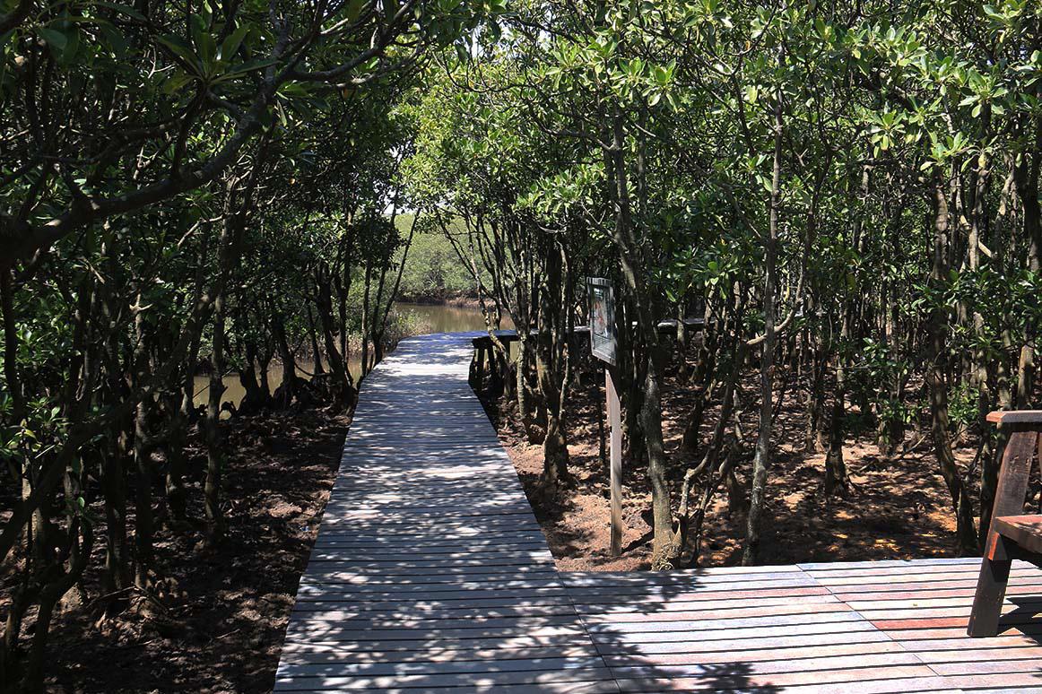 Boardwalk, Beachwood Mangroves