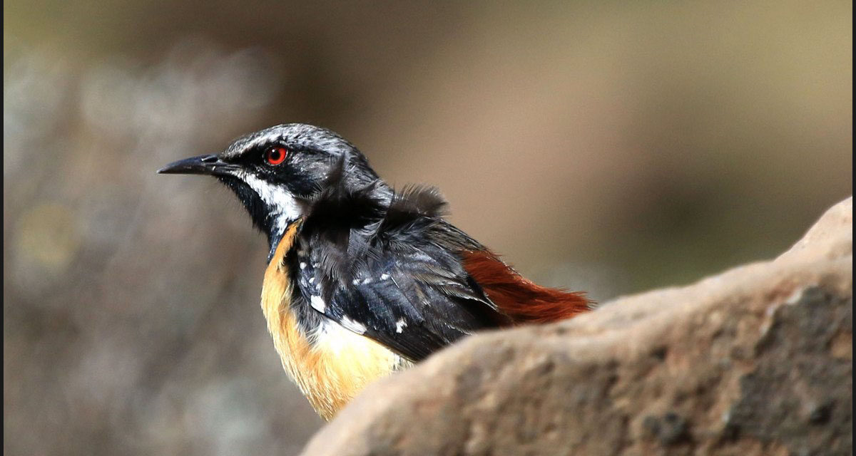Sani Pass is for the Birds