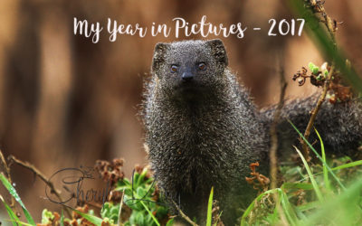 My Year in Pictures – 2017
