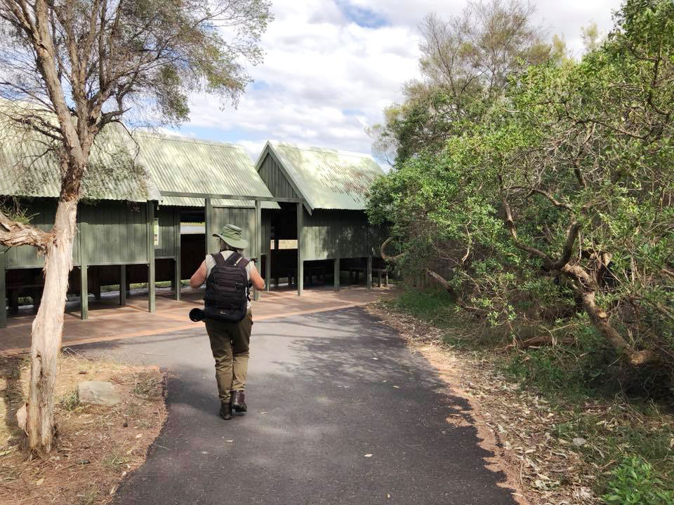 Lady walking to bird hide at Olympic Park, Sydney