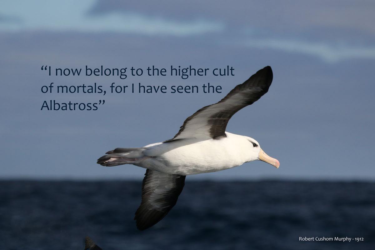 """Quote I""""ve seen an albatross"""