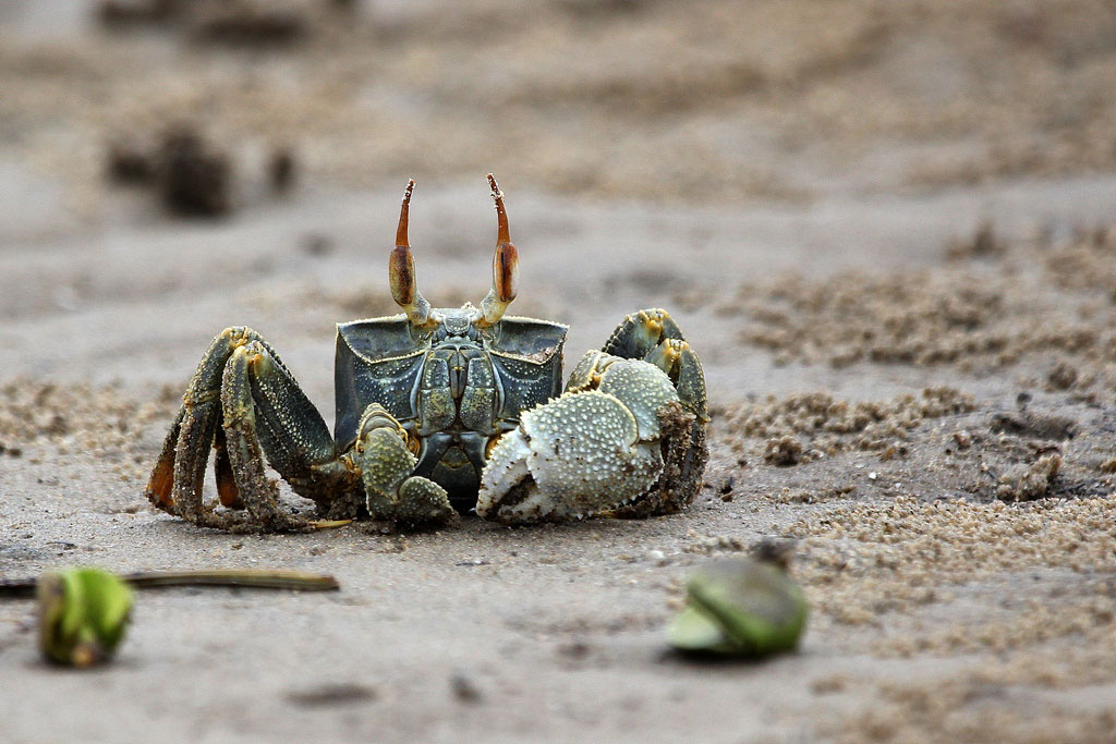 Crab in celebration of World Oceans Day