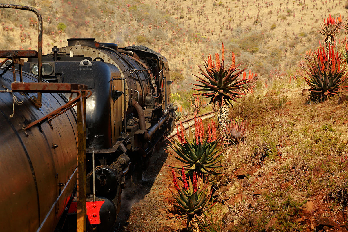Steam train at Creighton Aloe Festival credit to Wendy Freer